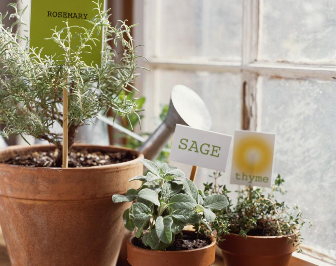 Coltivare In Casa Piante Aromatiche piante aromatiche in vaso: come si coltivano