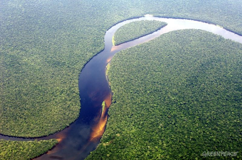 what makes the congo river rain forest biome unique Unique facts about south & central america: : the amazon rainforest usa | world this forest represents over half of the planet's remaining rainforests.