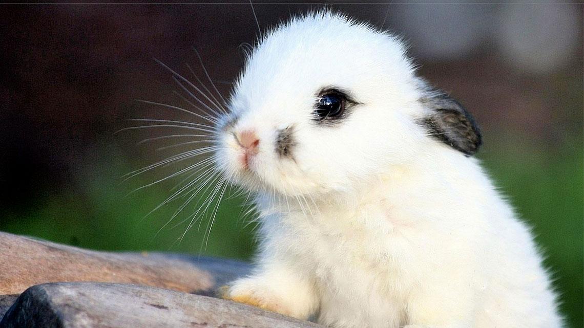 I simboli naturali della pasqua e il loro significato - Lettere stampabili del coniglietto di pasqua ...