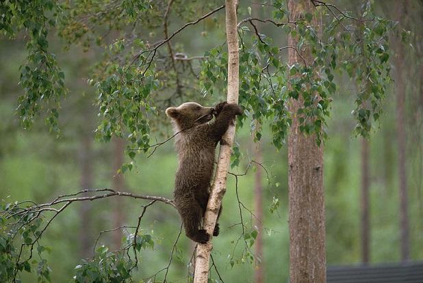 Salviamo l orsa daniza lifegate for Affittare una cabina nel grande orso