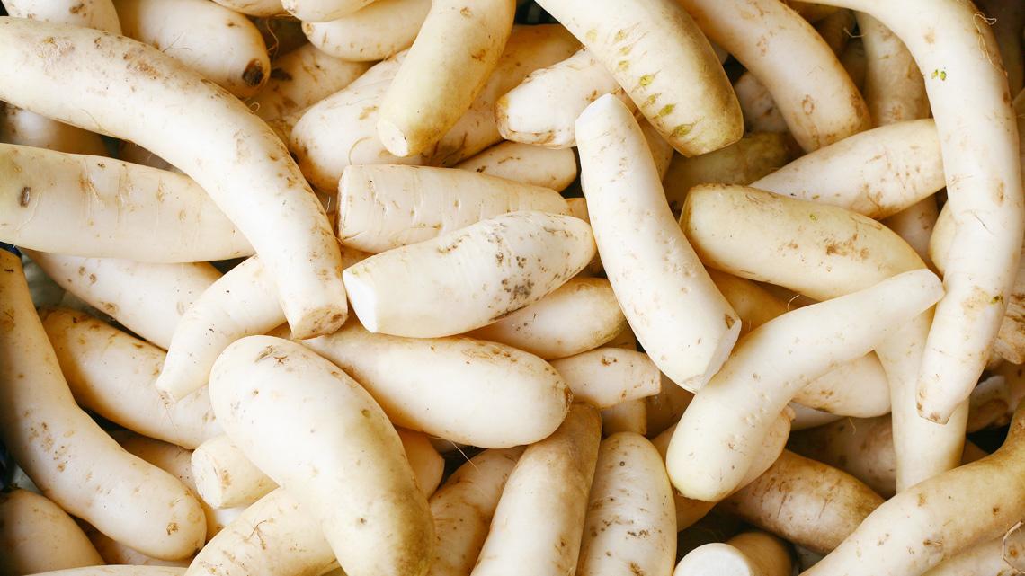 Al daikon sono attribuite incredibili virtù terapeutiche oltre che un buon contenuto di nutrienti.  ©Ingimage