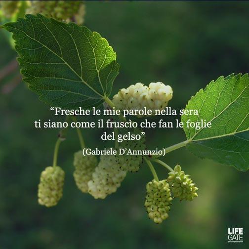 Fabuleux Le citazioni più belle per sempre | LifeGate WO23