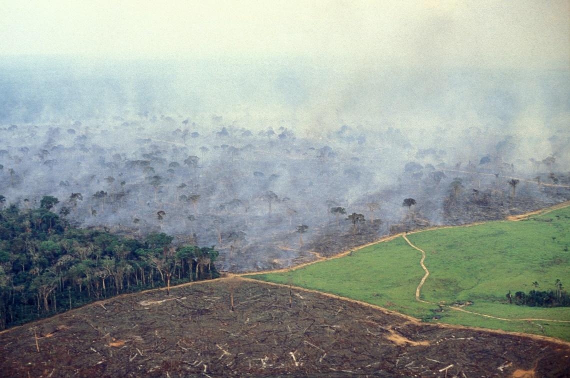 Deforestazione nell'Amazzonia brasiliana