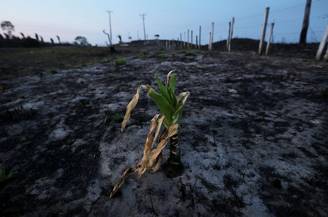 Pianta che spunta da un terreno bruciato