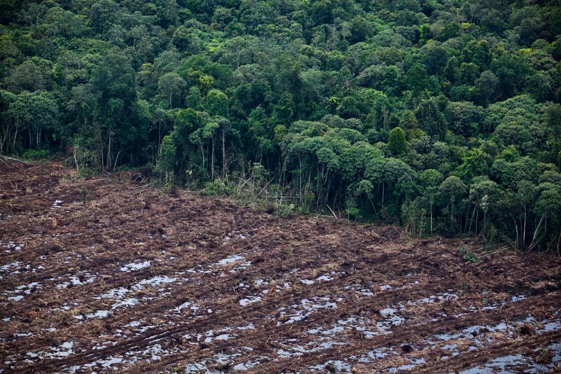 deforestazione, indonesia