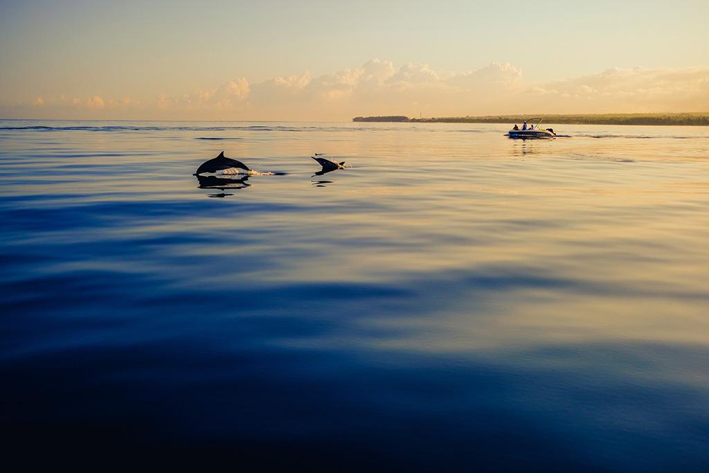 Giornata mondiale degli oceani LifeGate PlasticLess