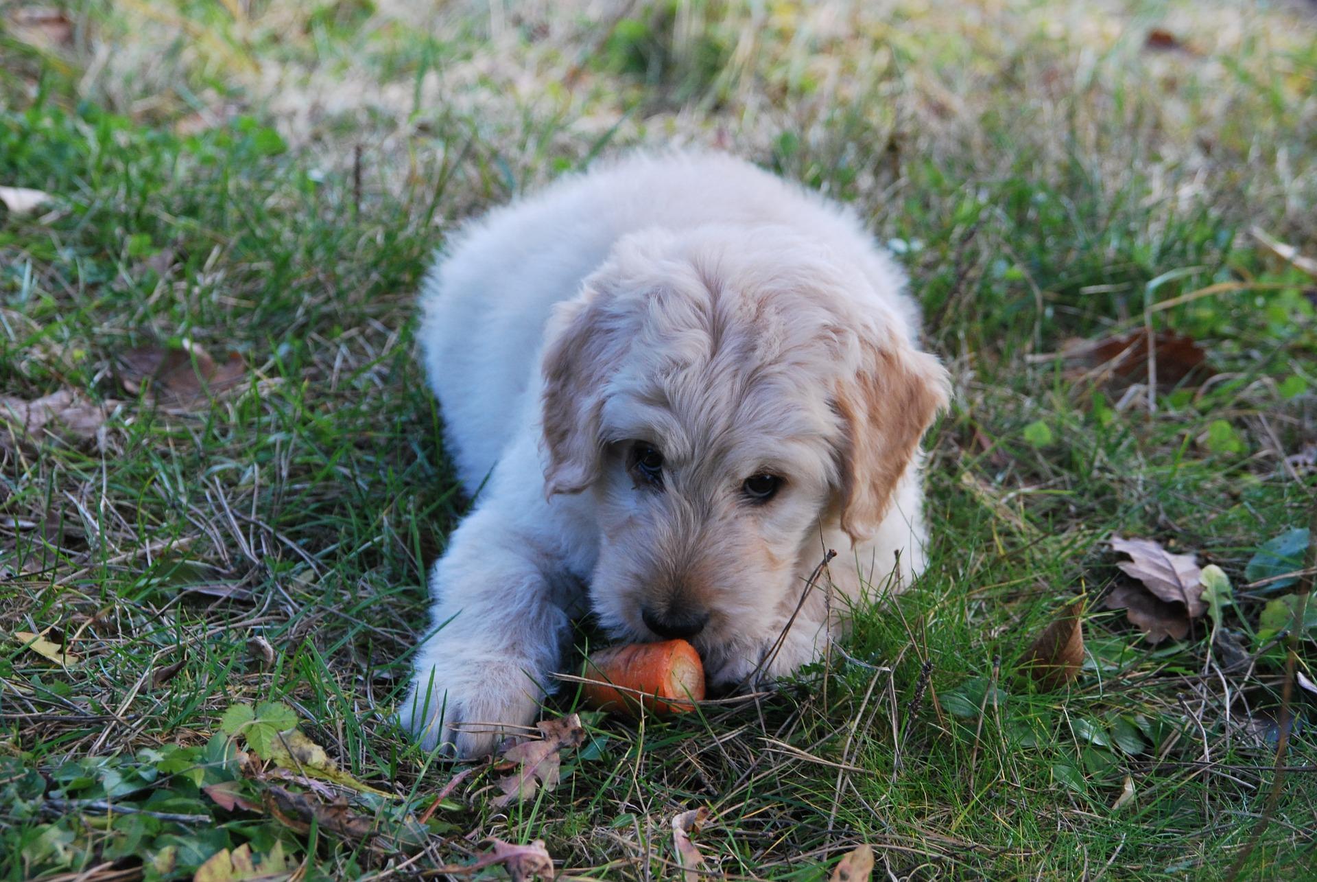 Populaire Cosa devono mangiare cani e gatti d'estate DL81