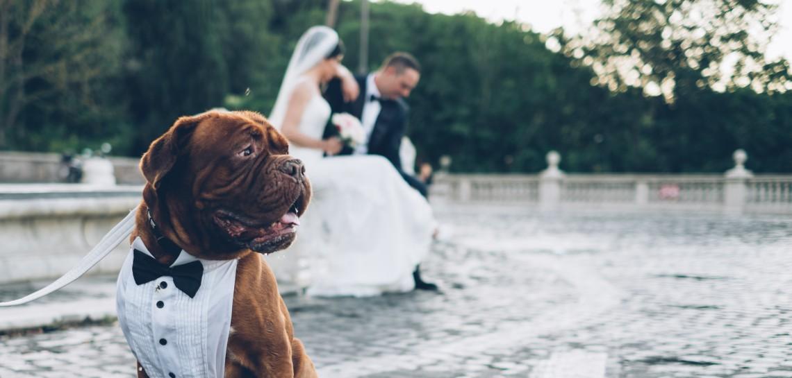 Matrimonio Uomo Cane : Wedding dog sitter quando il cane viene al tuo matrimonio