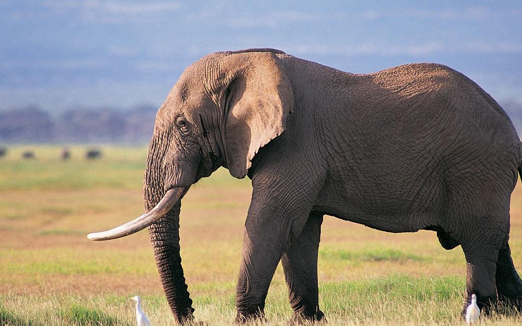 Mozambico distrutta la pi grande quantit di corna di - Elefante foglio di colore dell elefante ...