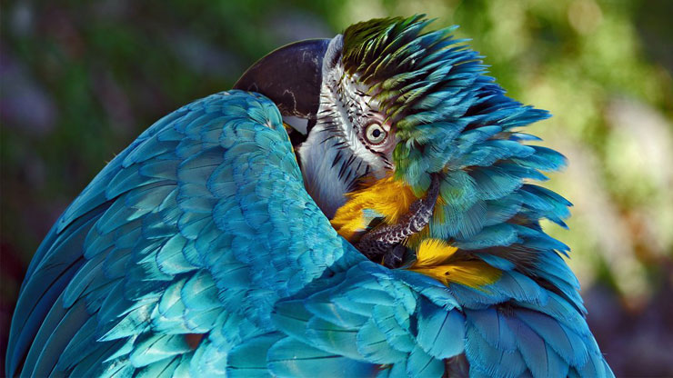 Famoso Le 10 foto di natura più belle dell'anno per lo Smithsonian | LifeGate QW99