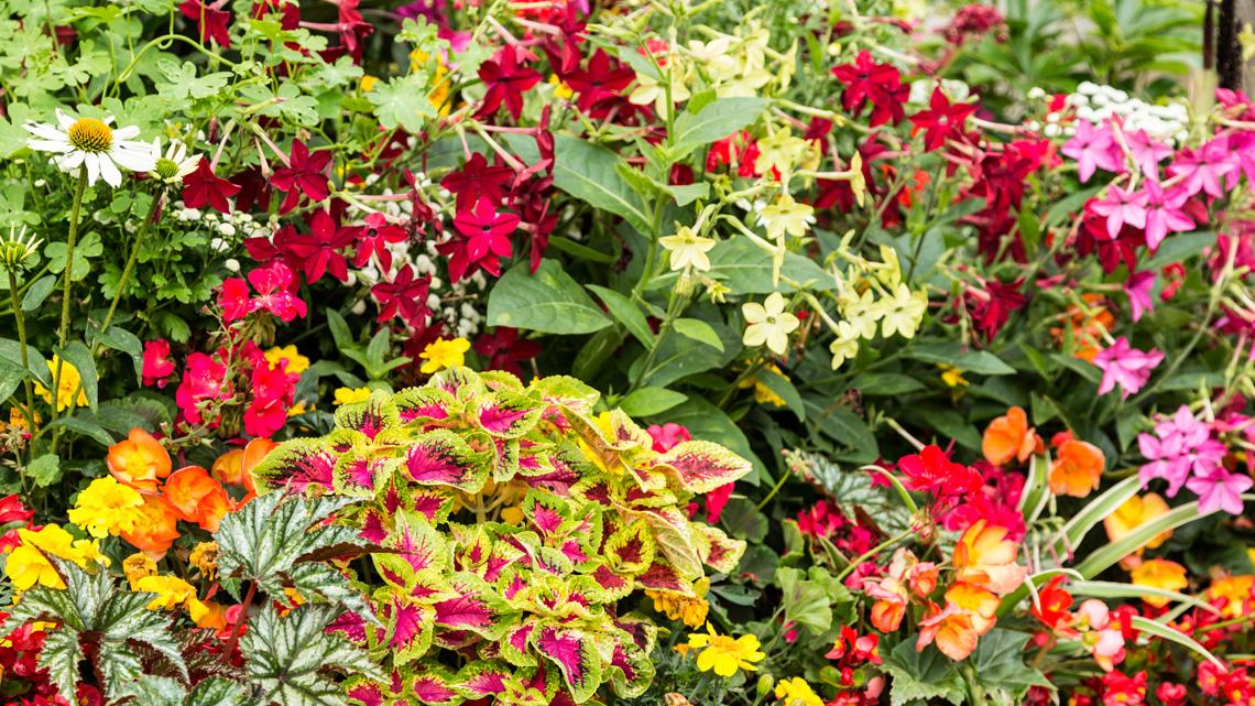 Fiori eduli l elenco dei fiori commestibili che puoi - Fiori gialli profumati ...