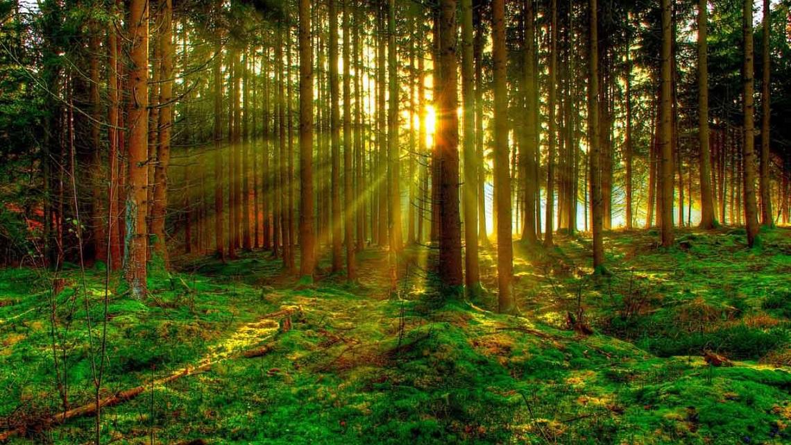 apple protegge le foreste per avere carta sostenibile
