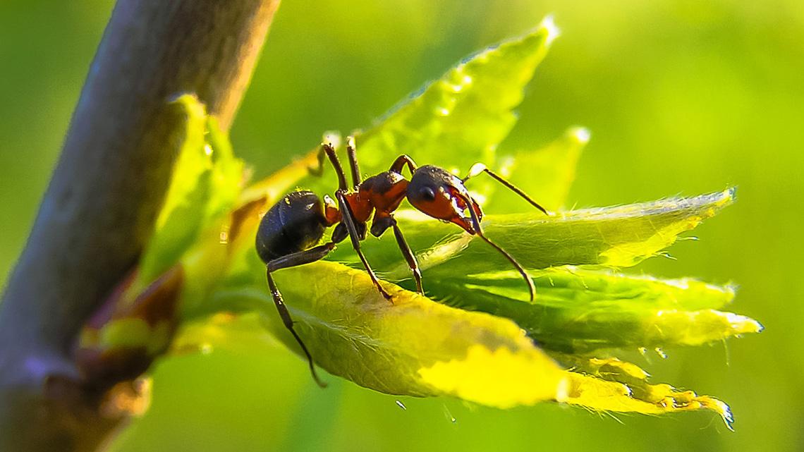 Come allontanare le formiche da casa e dall 39 orto lifegate - Come eliminare le formiche in casa ...
