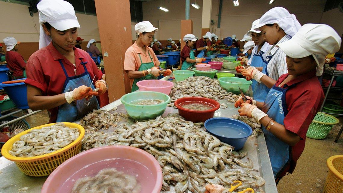 La più grande azienda nella distribuzione di gamberetti, la Charoen Pokphand (CP) Foods, che fornisce catene come Aldi, Carrefour, Costco, Tesco e Walmart compra farina di pesce per i suoi allevamenti. La CP Foods ha dovuto ammettere che gli schiavi sulle barche e negli stabilimenti di trasformazione sono una realtà negli ambienti dove si approvvigiona di scampi e gamberi.