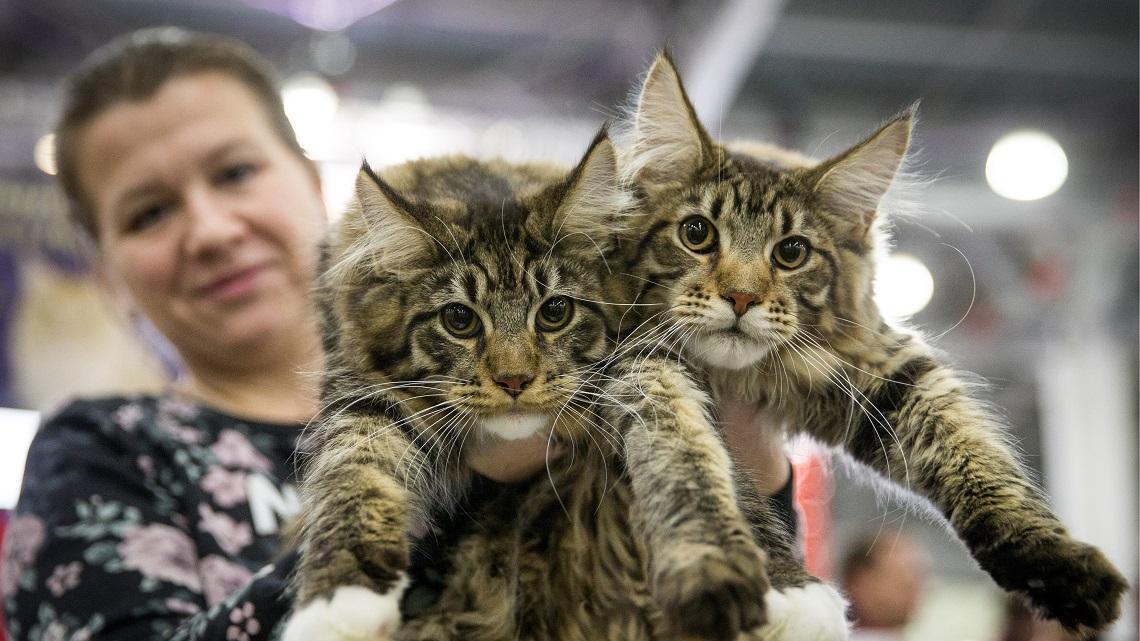Meglio Scegliere Un Gatto Maschio O Femmina Pro E Contro Lifegate
