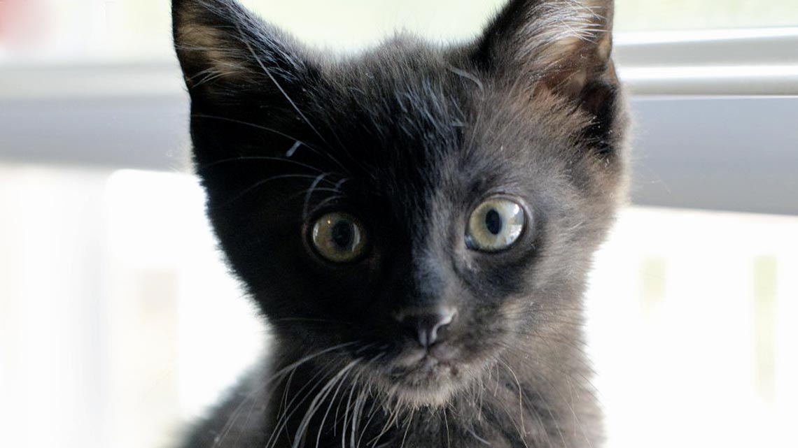 Il Gatto Nero è Un Talismano E Porta Fortuna Ecco Perché