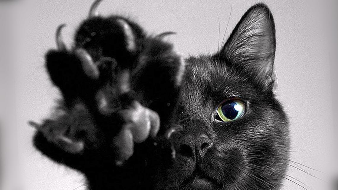 Il gatto nero un talismano e porta fortuna ecco perch - Foto porta fortuna ...
