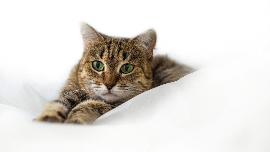 I consigli da leggere prima di scegliere un gatto per - Gatto defeca per casa ...
