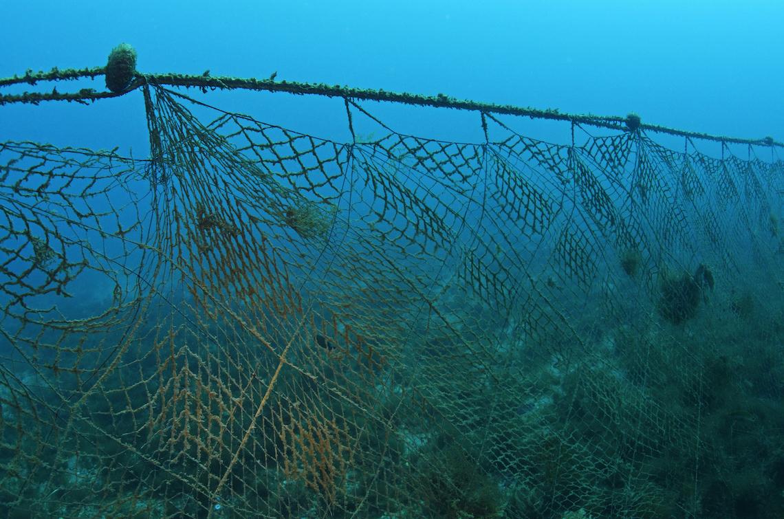 Nuove reti biodegradabili potrebbero aiutare a risolvere - Rete da pesca per decorazioni ...