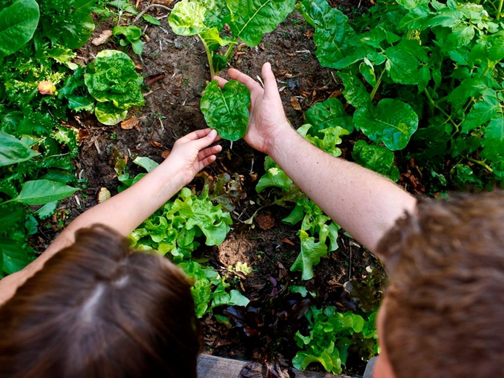 attività giardinaggio