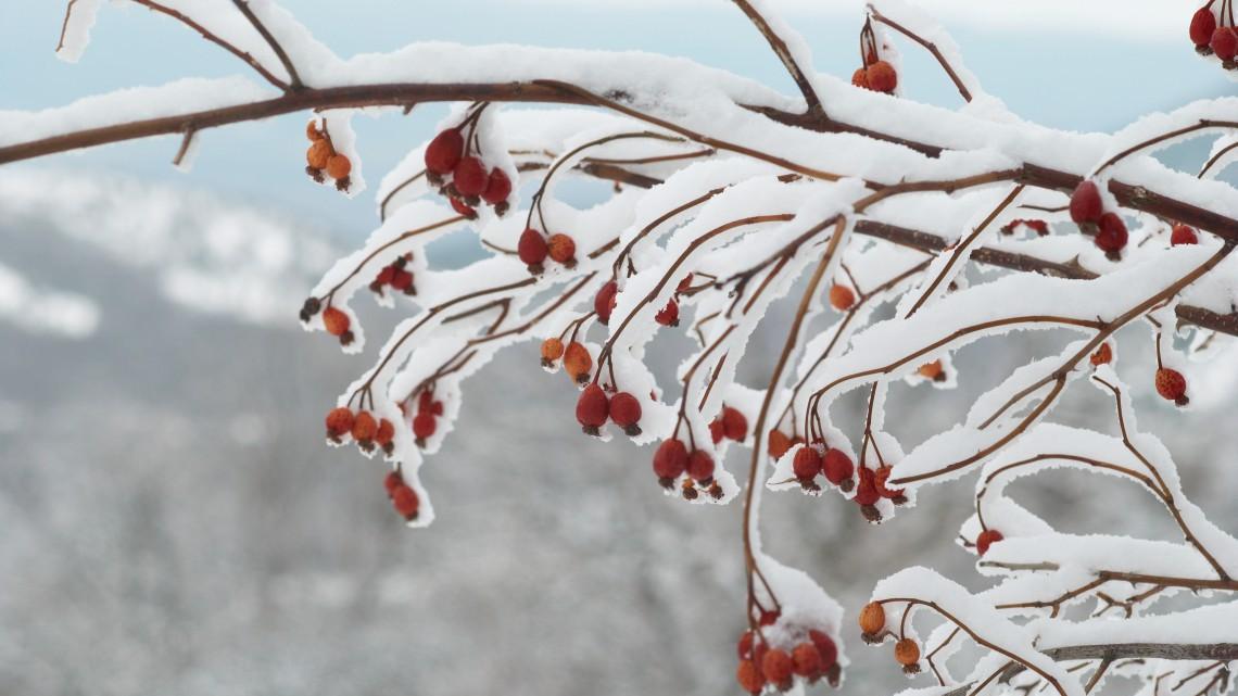 10 piante resistenti al freddo che fioriscono in inverno for Foto di alberi da colorare