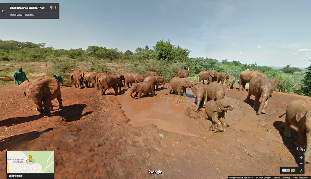google-street-view-elephants.jpg