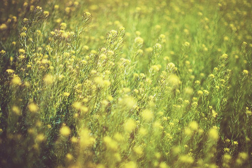 allergie graminacee