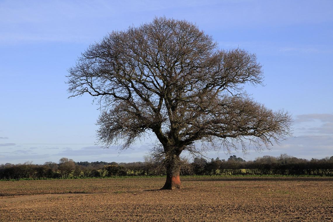 L 39 albero significato del simbolo universale della vita - Immagine dell albero a colori ...