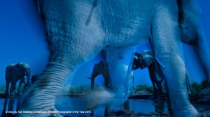 Wildlife photographer of the year, tutti gli incontri con i fotografi