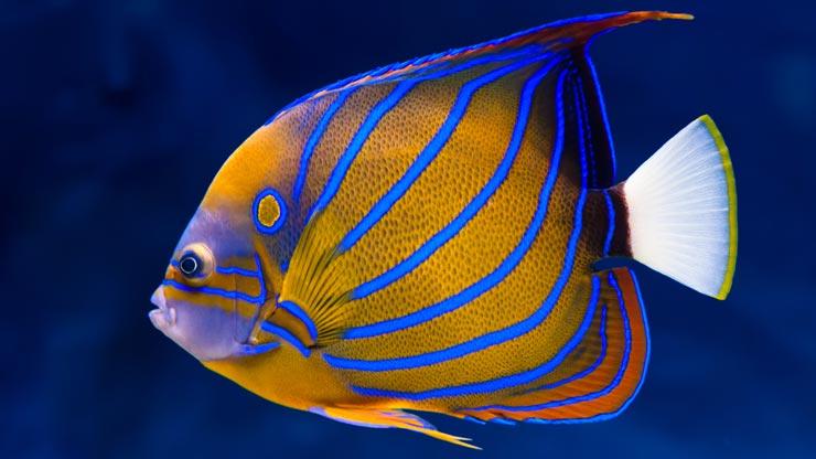Pesci for Sfondi pesci tropicali