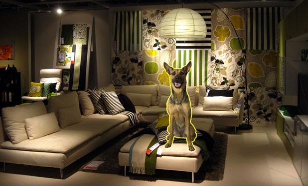 Rivoluzionaria campagna di Ikea per l'adozione dei cani ...