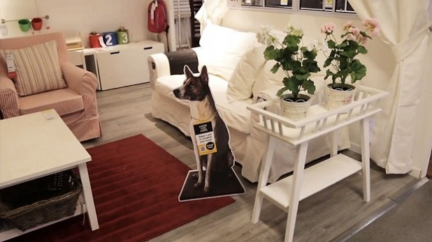 Rivoluzionaria campagna di Ikea per l'adozione dei cani senza casa ...