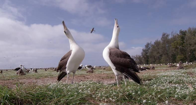 Albatross, il documentario di Chris Jordan
