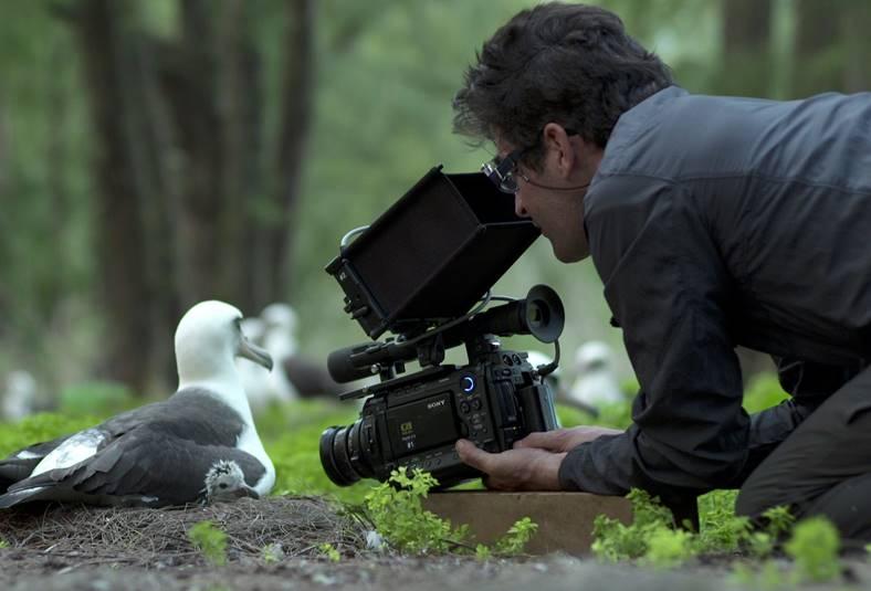 Chris Jordan, Albatross