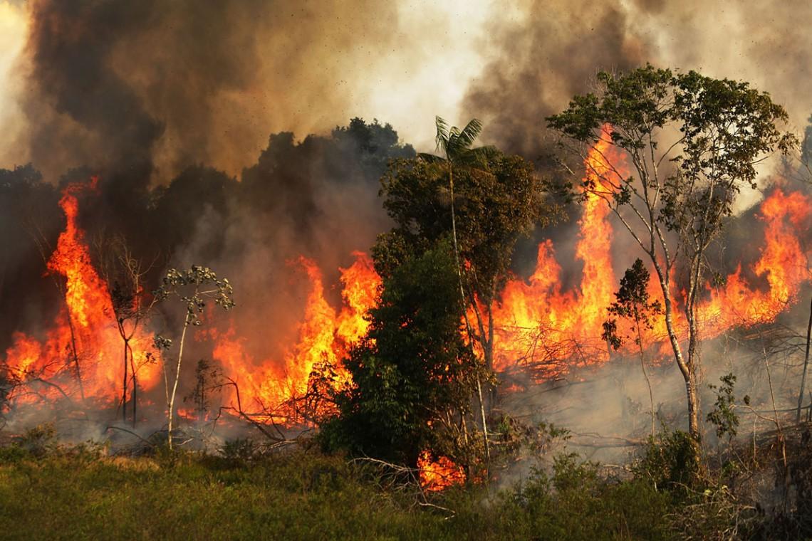 incendio, foresta amazzonica, brasile