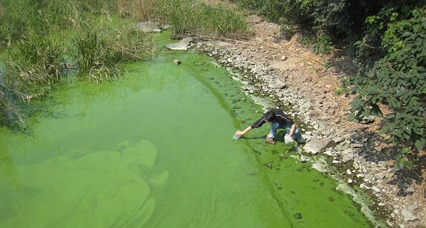 lago inquinato