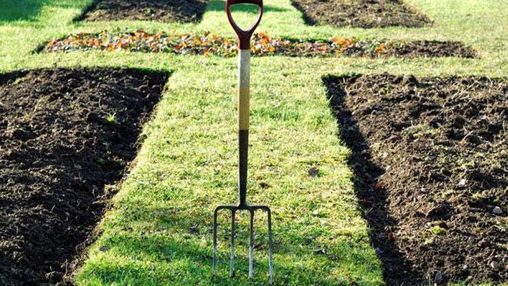 Orto di febbraio cosa piantare e lavori del mese lifegate for Cosa piantare nell orto adesso