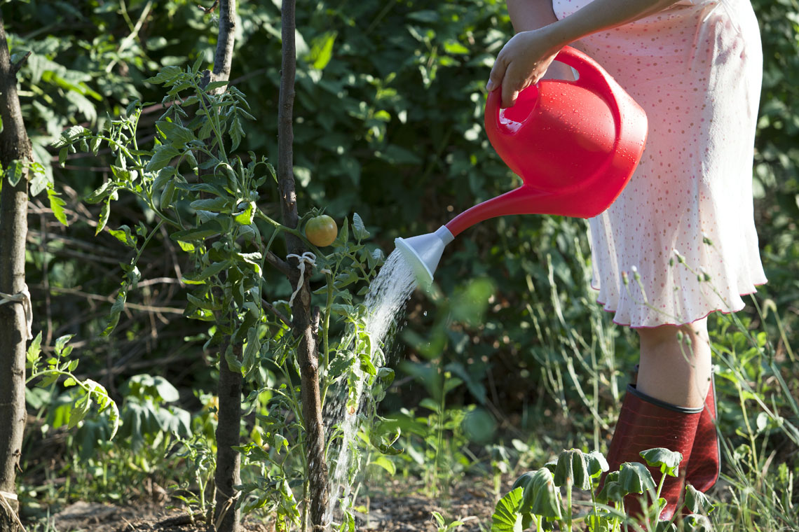 Cosa Piantare A Febbraio orto di agosto: cosa piantare e lavori del mese - lifegate