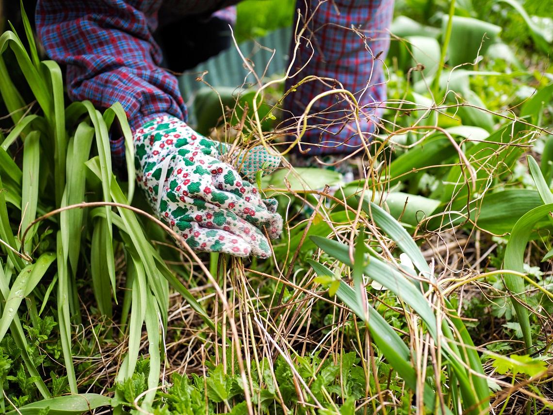 Cosa Seminare A Gennaio orto di settembre: cosa piantare e i lavori del mese - lifegate