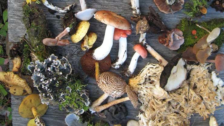 Il trattamento di funghi di Candida da rimedi di gente