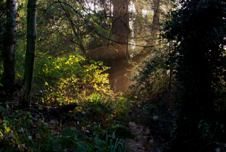 moseley_bog_-_early_morning_this_photo_was_taken_by_alan_sprung