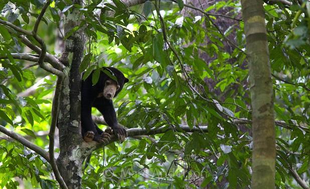 I grandi mammiferi sono indispensabili per la - Gli animali della foresta pluviale di daintree ...