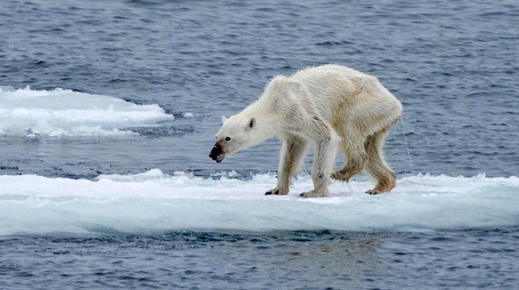 orso polare, scioglimento dei ghiacci