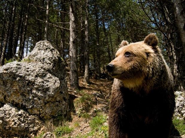 5 specie che si possono ammirare solo in italia lifegate for Affittare una cabina nel grande orso