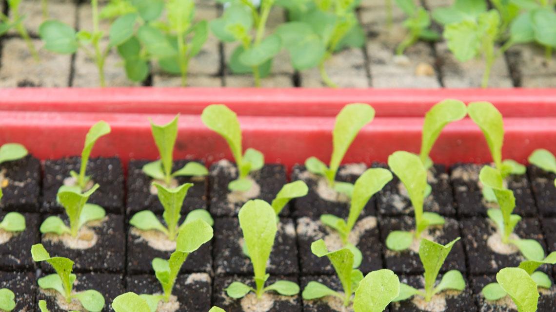 Orto di aprile cosa piantare e i lavori del mese lifegate for Cosa piantare nell orto adesso