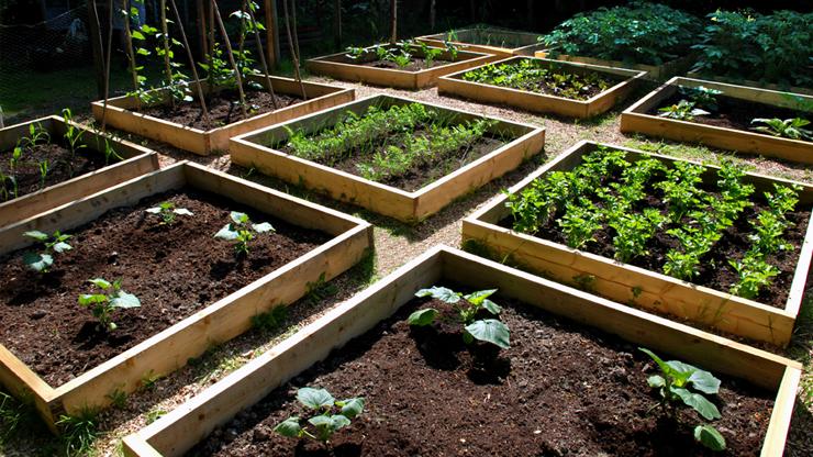 Orto di giugno cosa piantare raccolta e lavori del mese for Cosa piantare nell orto adesso