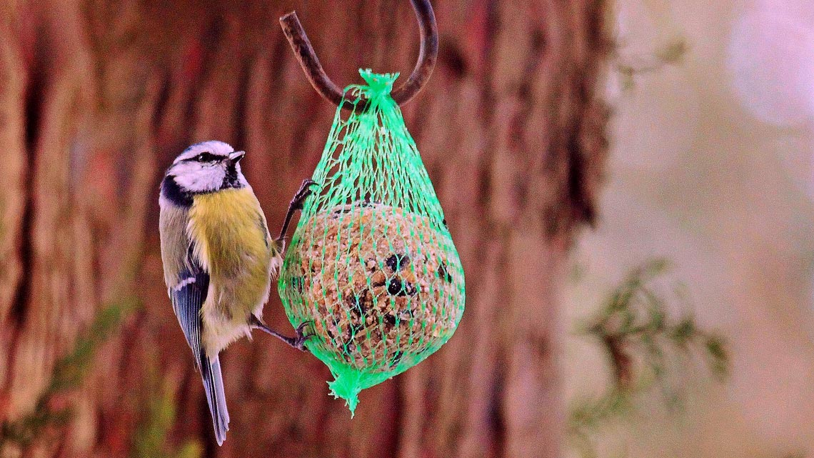 novità Mangiatoia Wildlife World in ceramica CINCIARELLA Mangiatoia