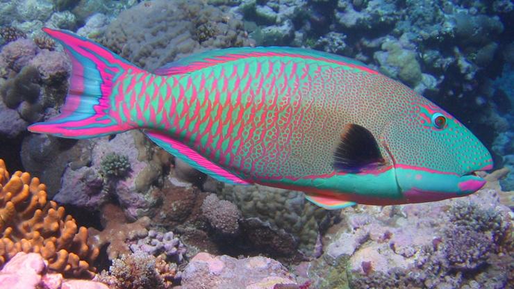 colorful aquarium app