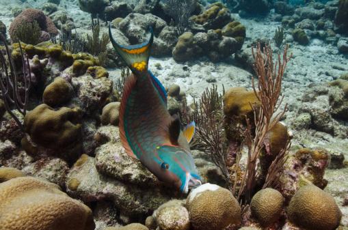 Per salvare la barriera corallina bisogna cominciare dal for Acquario tartarughe e pesci insieme