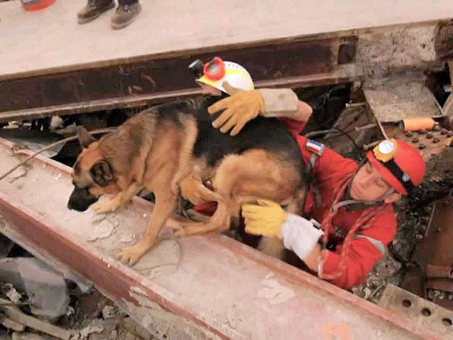 Cani Da Valanga E Da Salvataggio Razze E Addestramento Dei Nostri